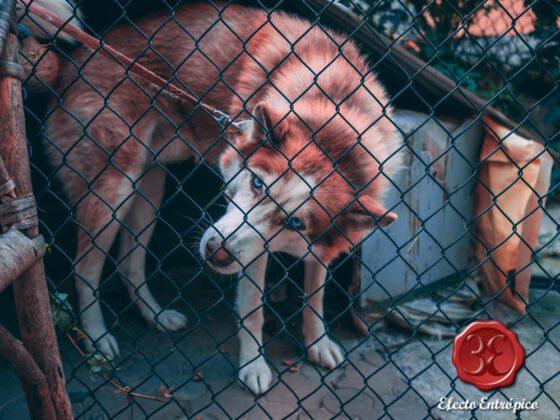 terror a los animales por culpa de padres y madres